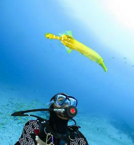 diving cape verde islands